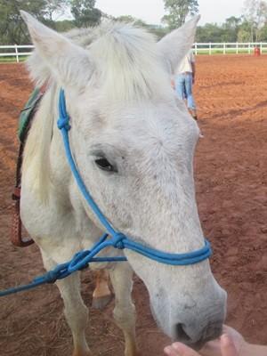 Sereno tem 15 anos de idade e também foi levado da Apae (Foto: Divulgação/Apae de Agudos)