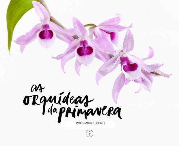 Orquídeas Da Primavera Descubra Quais Espécies Usar Casa Vogue