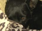 Cão 'espera' há 8 meses em pátio de hospital pelo dono que morreu em SC