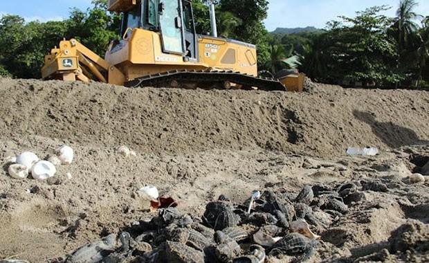 Imagem divulgada pela organização Papa Bois nesta terça-feira (10) mostra máquina empurrando areia ao lado de ovos e filhotes de tartaruga. (Foto: Papa Bois/AP)