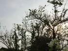Inmet prevê chuva em MS no sábado, mas tempo continua abafado