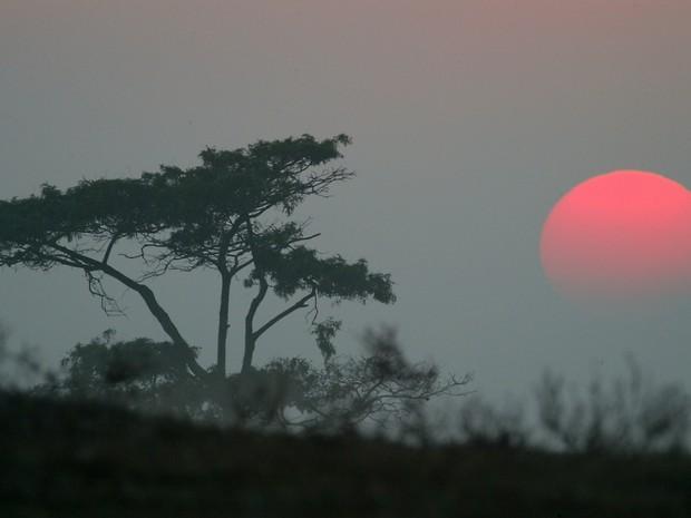 Parque Nacional de Restinga de Jurubatiba em Macaé (Foto: Romulo Campos/Arquivo pessoal)