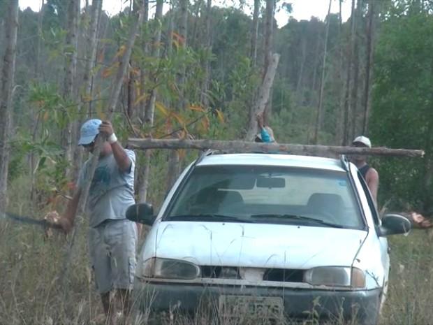 Furto de madeira no Norte do Espírito Santo (Foto: Reprodução/ TV Gazeta)