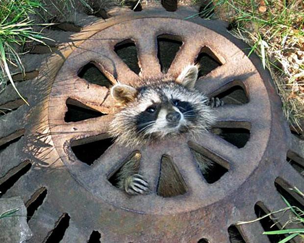 Funcionários conseguiram libertar o animal (Foto: Dearborn Heights Department of Public Works)