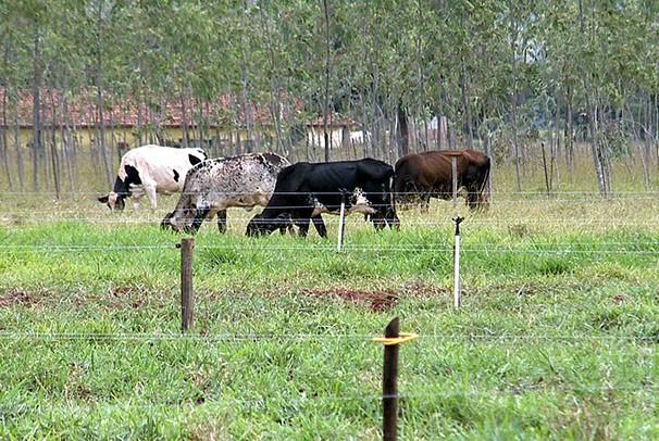 Pecuaristas buscam alternativas para aumentar a produção (Foto: Reprodução/TV Fronteira)