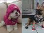 Telespectadores enviam fotos e vídeos para interagir com o Mania de Cão