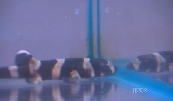 Paraná TV (Foto: Reprodução/RPC)