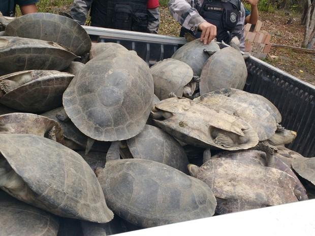 Tartarugas foram resgatadas nesta sexta (29) na região conhecida como 'Estradinha' (Foto: Divulgação/ Polícia Militar)
