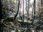 Incêndio em parque de Itaúnas segue sem controle após 18 dias