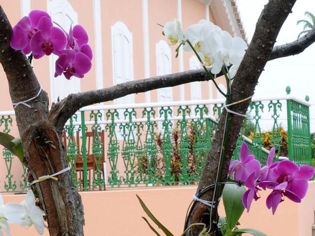 Orquídeas Quissamã (Foto: Adilson dos Santos/Divulgação Prefeitura de Quissamã)