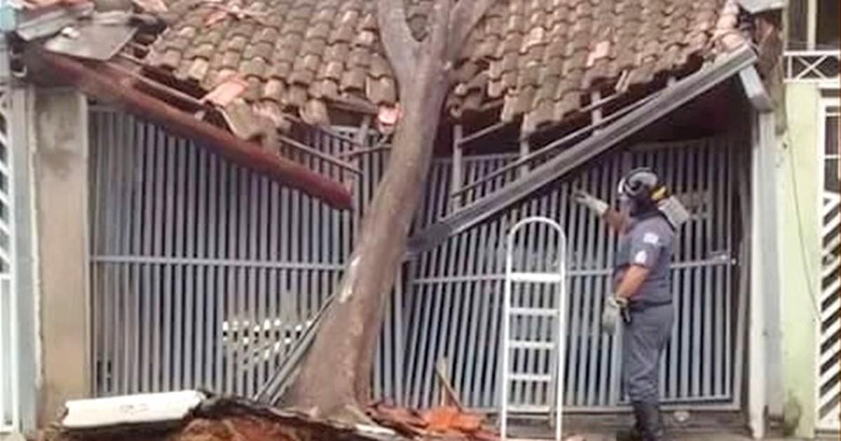 Chuva forte causa queda de árvores em São José dos Campos e ... - Globo.com