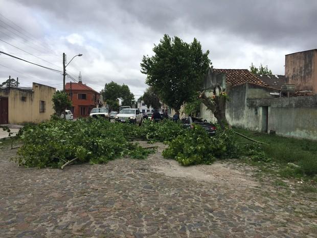 Defesa Civil alerta para possíveis estragos devido à ventania (Foto: Nathalia King/RBS TV)