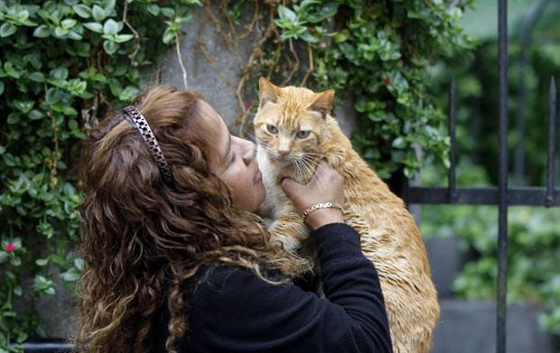 Gatos são alimentados nesta quinta-feira (2) em Lima, no Peru (Foto: Martin Mejia/AP)