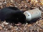 Urso é resgatado ao ser visto com a cabeça entalada em latão de leite