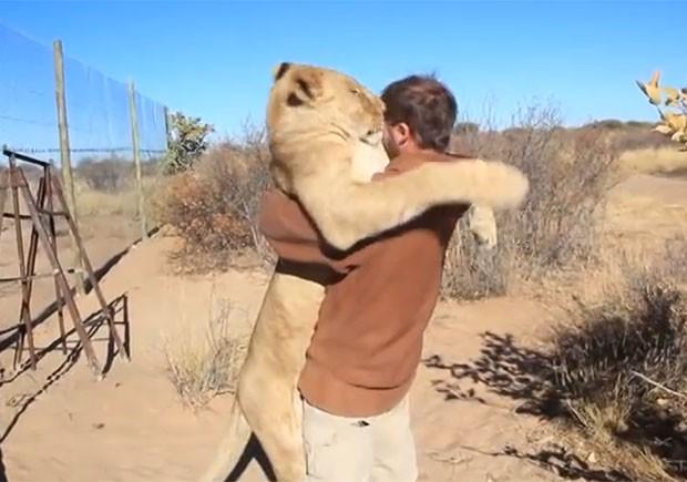 Vídeo de leoa abraçando conservacionista Valentin Gruener faz sucesso na web (Foto: Reprodução/YouTube/J Hawk Daily)