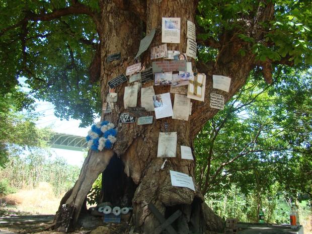Árvore onde Gregório foi morto pelo delegado Florentino (Foto: Gilcilene Araújo/G1)