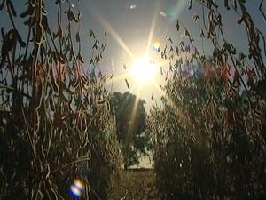 seca produtor rural  Luz MG colheita estiagem calor (Foto: Reprodução/TV Integração)