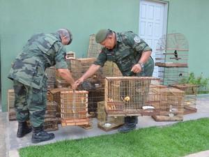 Cerca de 35 aves foram apreendidas (Foto: Walter Paparazzo/G1)