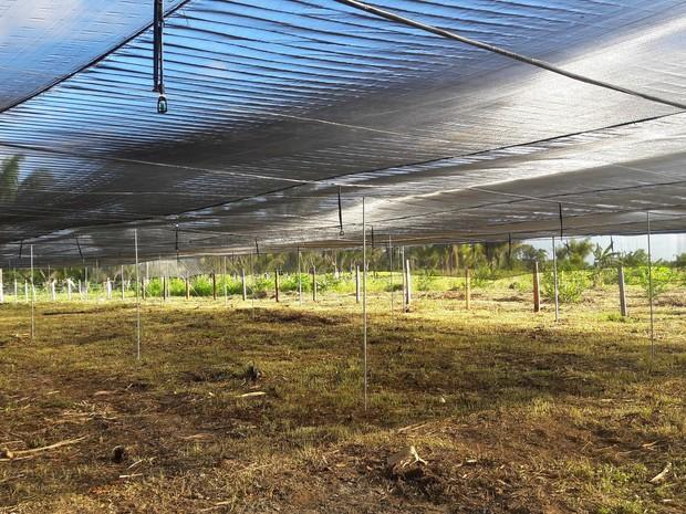 Viveiros tem capacidade para 300 mil mudas (Foto: Ideflor-bio/Divulgação)