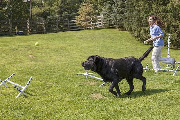 Labrador Ruby percorre circuito em resort para pets nos EUA (Foto: Tony Cenicola/The New York Times)