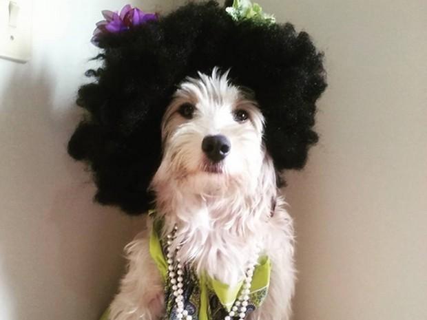 A cadelinha Pérola Carolline usando uma peruca. (Foto: Reprodução/Instagram)