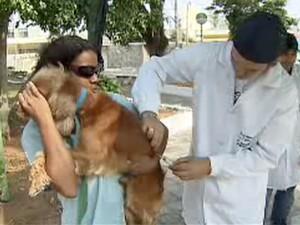 Prefeitura de São José faz mutirão de vacinação antirrábica (Foto: Reprodução/TV Vanguarda)