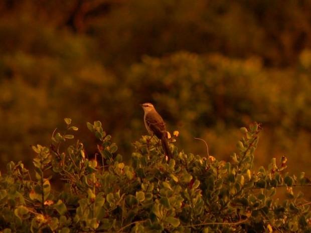 Pássaros estão entre os animais que embelezam o espaço.  (Foto: Reprodução/ TV Gazeta)