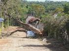 Vendaval arranca árvore, que cai sobre carro em Lambari, MG