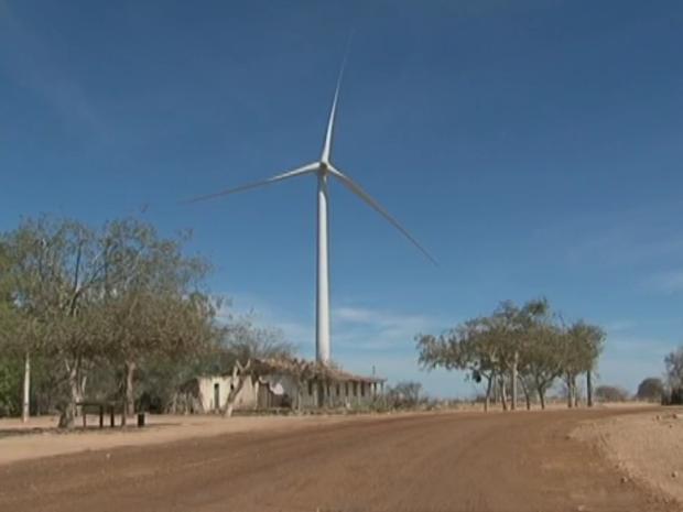 Complexo eólico Ventos de Santa Brígida, em Caetés, Agreste de Pernambuco (Foto: Reprodução/ TV Asa Branca)
