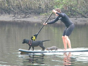 Até na prancha de stand up paddle os animais ficam juntos (Foto: Arquivo Pessoal / Alfredinho Bertioga)