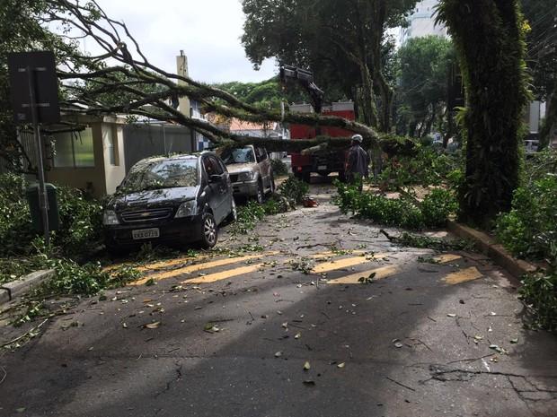 Chuva alaga ruas, derruba árvores e deixa bairros sem energia em S. José (Foto: André Luis Rosa/TV Vanguarda)