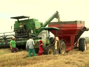 Foram distribuídas 400 toneladas de sementes de arroz pelo governo do estado (Foto: Reprodução/TV Gazeta)