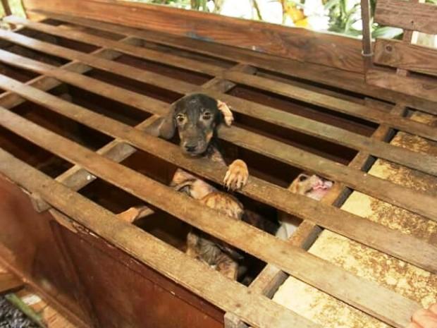 Animais foram encontrados em meio a pedaços de madeira (Foto: 2ª Cia de Polícia Ambiental / Divulgação)