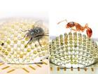 Cientistas criam câmera que imita os olhos compostos dos insetos