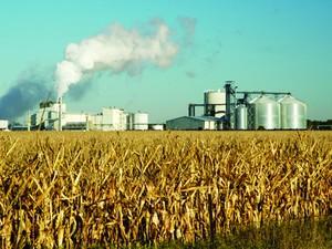 Produção de milho para biocombustível (Foto: Divulgação/Universidade de Illinois)