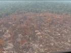 Operação combate desmatamento na região sudoeste do Pará
