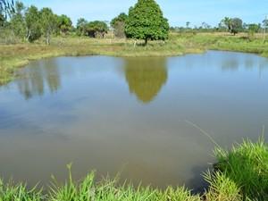 Agricultor afirma que 200 peixes morreram em represa (Foto: Magda Oliveira/G1)