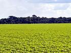 Agricultores de MT vão discutir oportunidades para soja convencional