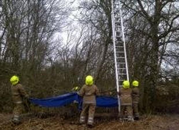 Resgate ocorreu em parque na cidade de Blairgowrie (Foto: Divulgação/Scottish SPCA)