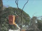 Prefeitura retira 18 árvores de avenida para realizar obra viária em Piracicaba