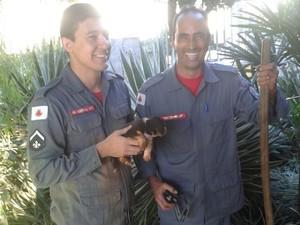 Resgate cachorro Araxá (Foto: Corpo de Bombeiros/Divulgação)