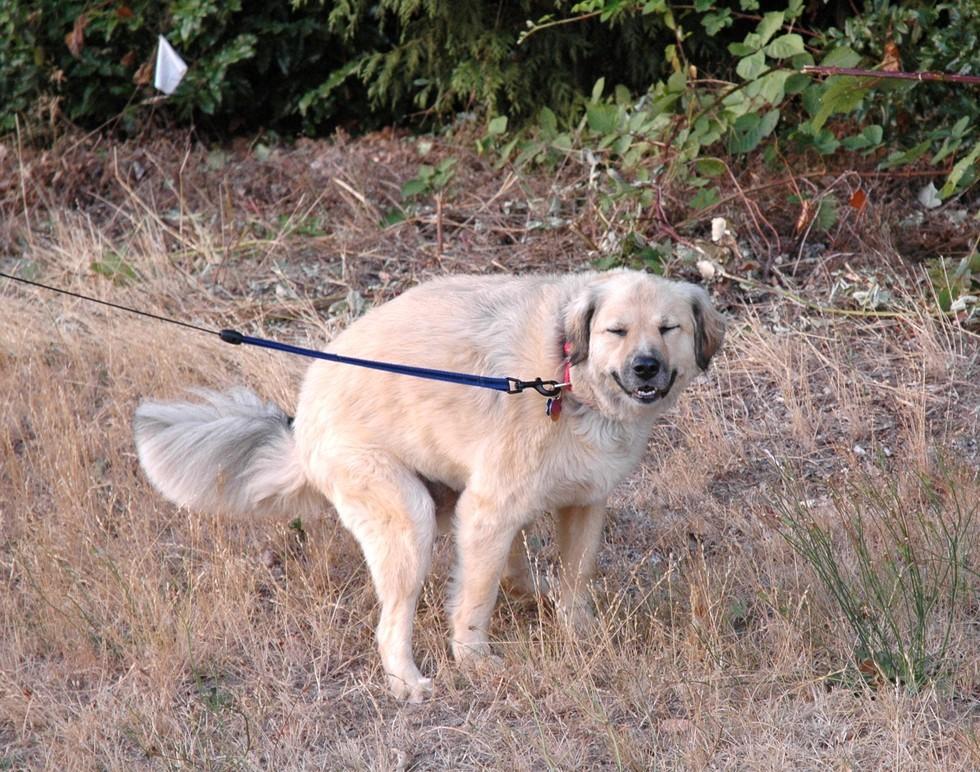 """Seu animal pode estar pedindo seu """"apoio moral"""" (Foto: Wikimedia)"""