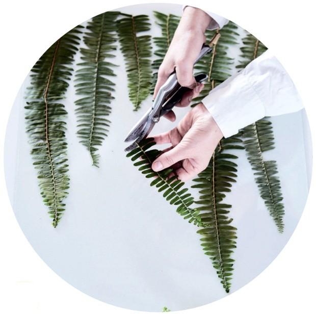 Com um pano úmido, limpe cuidadosamente as folhas. Também aproveite para retirar os estames e partes secas, e para cortar as plantas no tamanho desejado (Foto: Warren Heath / Bureaux.Co.Za)