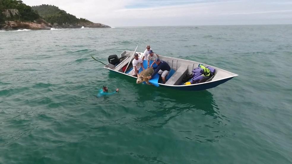 Soltura foi na manhã desta terça-feira no litoral norte de SP (Foto: Divulgação/Projeto Tamar)
