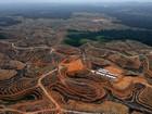 Greenpeace acusa multinacional de apoiar desmatamento na Indonésia