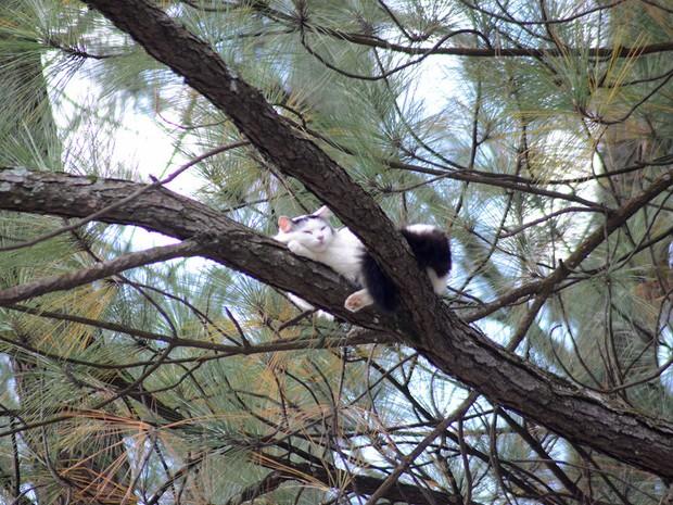 Apesar de ficar quatro dias presa na árvore, gata foi resgatada em boas condições de saúde (Foto: Divulgação/Zezinho Santos)