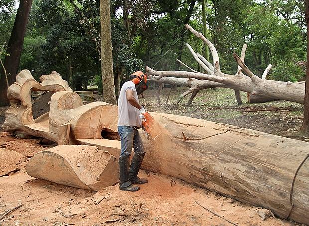 banco de jardim frases:processo de criação do banco, feito a partir de um tronco de