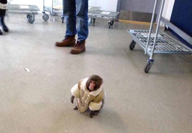 Animal foi visto andando pela loja vestido em seu casaco favorito (Foto: Canadian Press/AP)