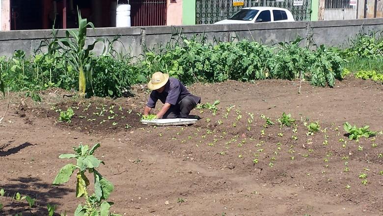horta-cultivador-sao-bernardo (Foto: Lucas Alencar)