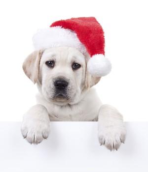 O que é importante saber antes de escolher um cão como presente de Natal (Foto: Thinkstockphotos)